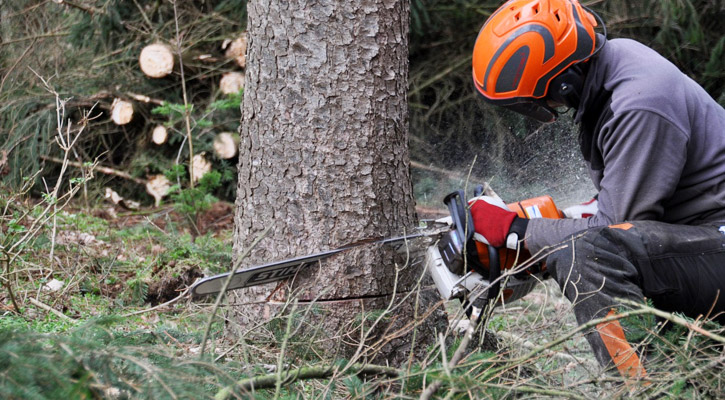 How to Cut Down (or Fell) a Tree with a Chainsaw
