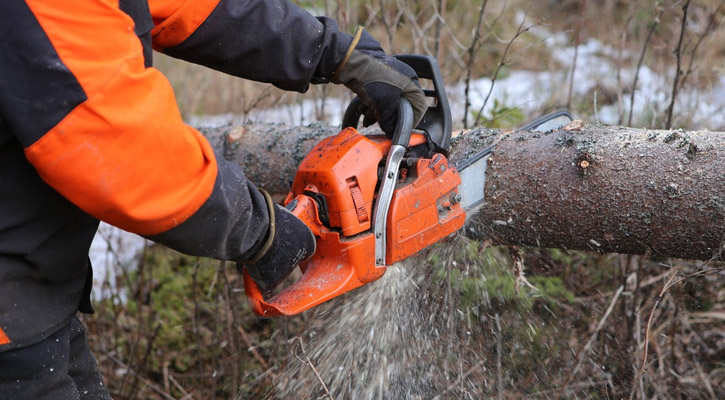 Person using a small chainsaw to cut a tree
