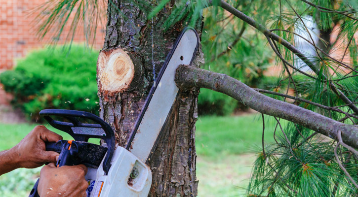 Best Battery Chainsaw Cutting a Tree