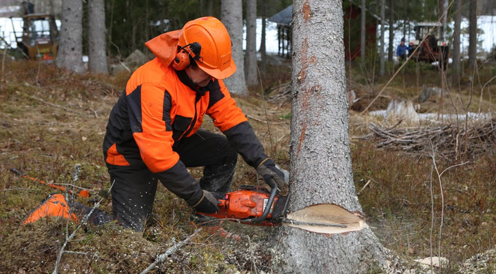 Best Chainsaw Safety Equipment