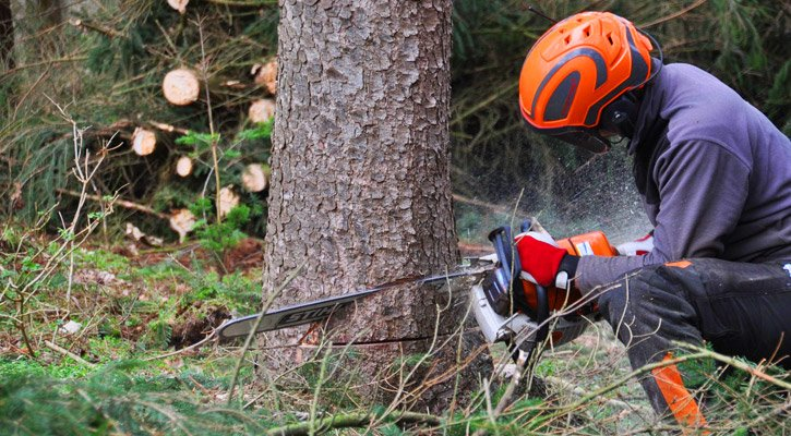 Best Chainsaw Safety Gear